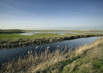 thumb_rspb-rainham-marshes-3